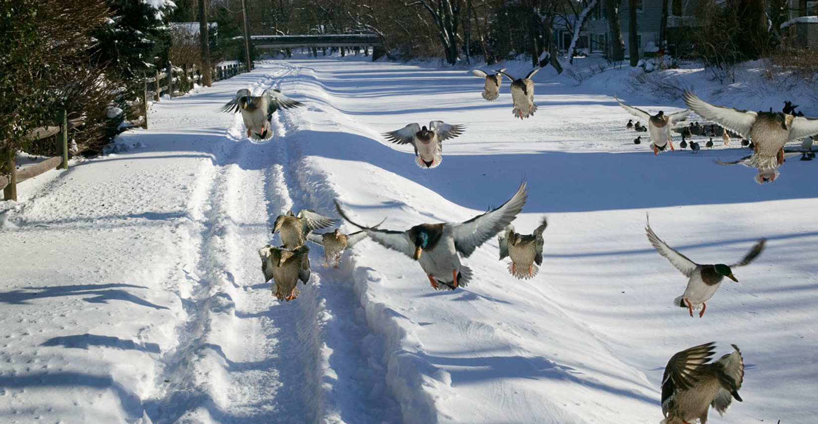 look at the birds taking off